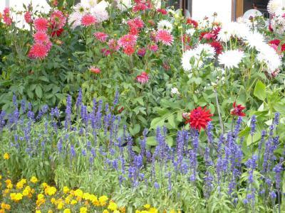 Ville fleurie et zone verte